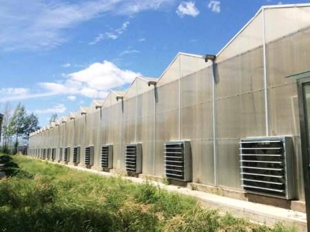 陽光板溫室大棚