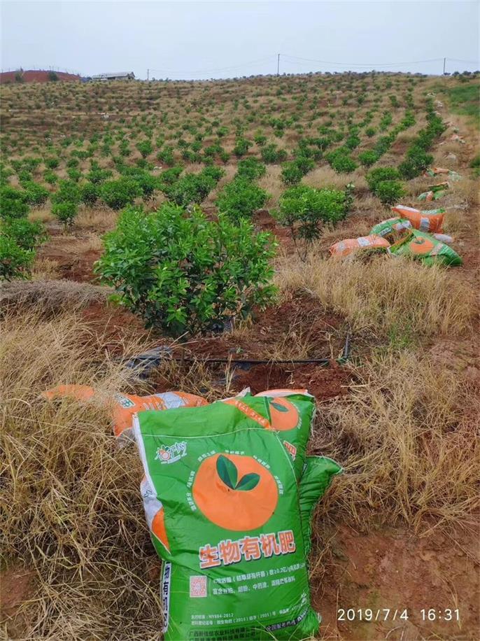 广西柑橘生物有机肥,柑橘类有机肥