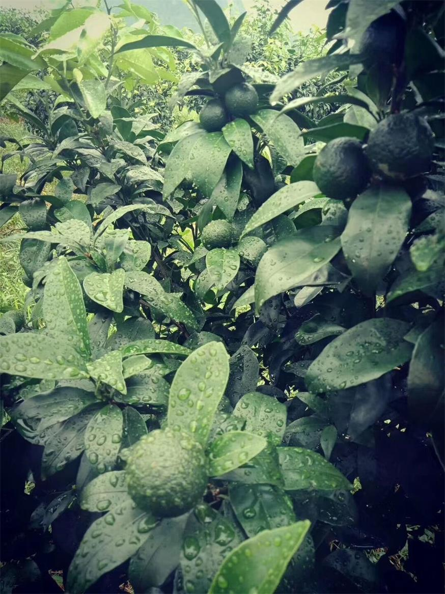 广西柑橘生物有机肥-质量好的柑橘类生物有机肥市场价格