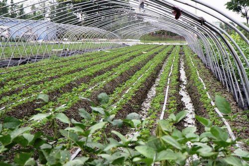 膠州大田節水灌溉-濰坊優惠的大田節水灌溉供應