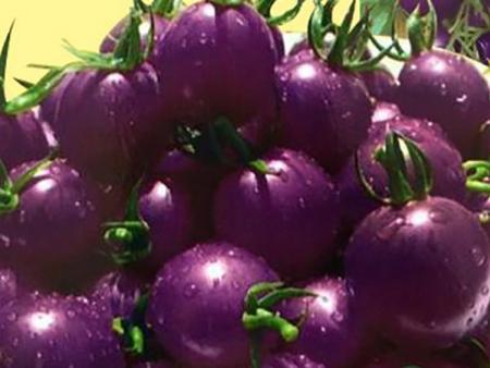 紫玲珑番茄出售|山东性价比高的_紫玲珑番茄出售