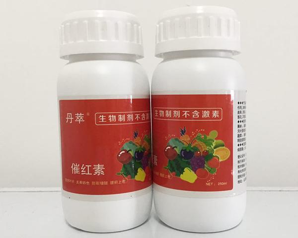 草莓催红素_口碑好的彩椒催红素就在农伯乐生物科技