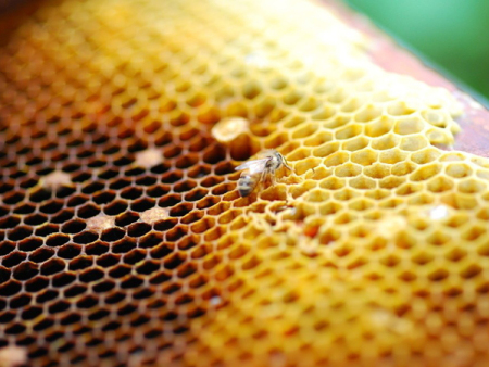 山东蜂蜡哪里有-供应潍坊口碑好的蜂蜡