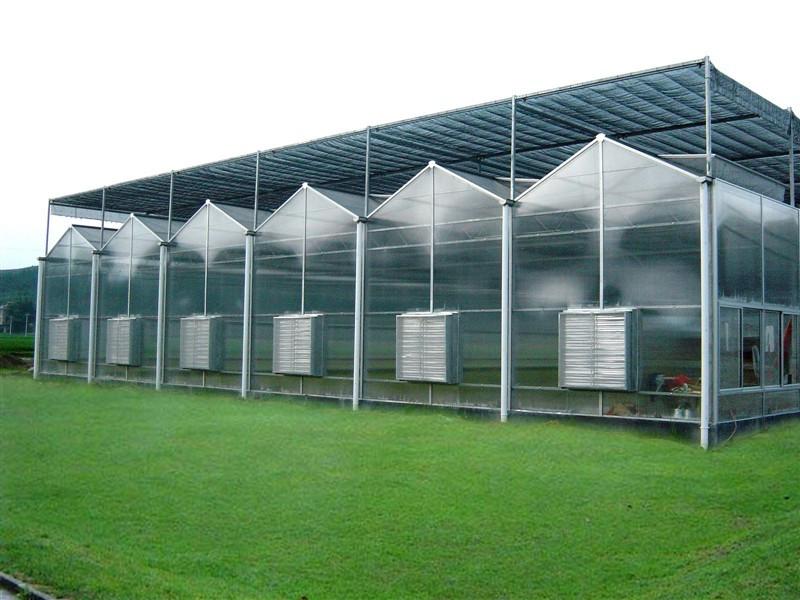 河北有立柱温室大棚-口碑好的阳光板智能温室哪里有