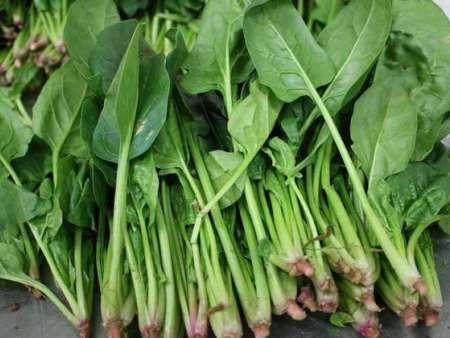 菠菜商超对接-广西菠菜价格-广州菠菜春节套菜