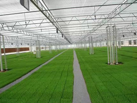 温室工程造价-山东温室工程承建-山东温室工程建造