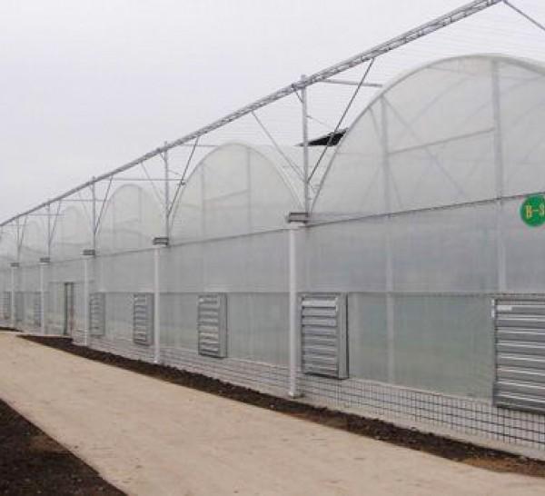 连栋薄膜温室造价-蔬菜薄膜温室-湖北薄膜温室