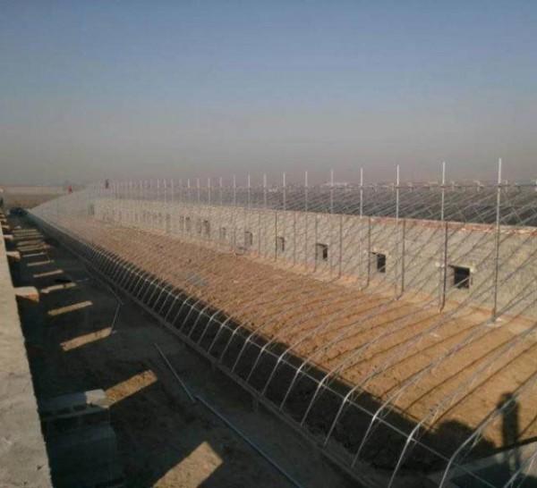 连栋阳光板温室,连栋阳光板温室承建,连栋阳光板温室建造