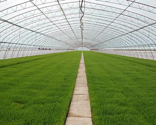 大型蔬菜大棚郑州温室大棚厂家永发温室大棚