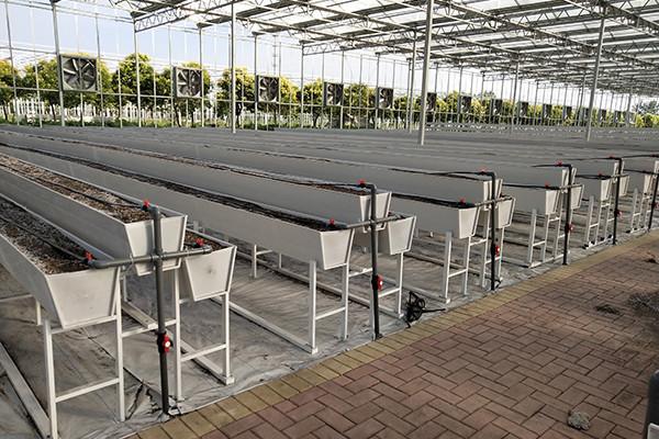 温室无土栽培设备-安徽温室无土栽培技术-安徽温室无土栽培模式