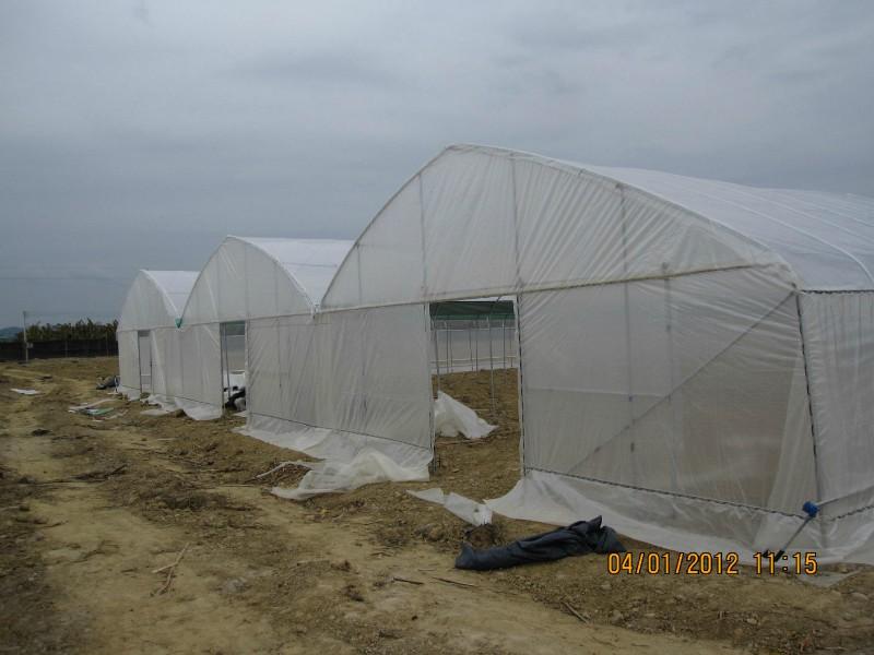 广西温室大棚厂家批发,蔬菜大棚建设