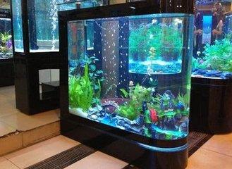 蘇州滿意的魚缸批發|超市魚缸定做
