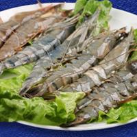 海鲜批发代理商_北京哪里有口碑好的海鲜供应