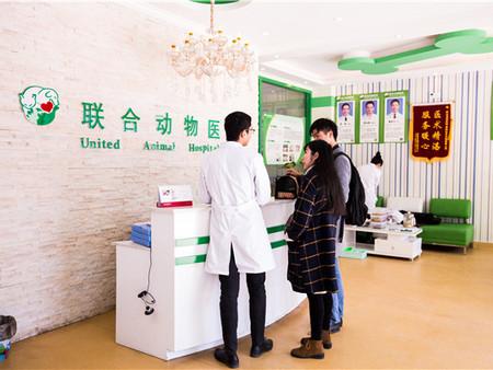 具有口碑的武漢聯合動物醫院傾情推薦-一級的武漢動物醫療醫院