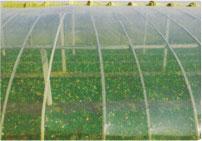 农用PO膜批发商-价格合理的农用PO膜当选首信农膜