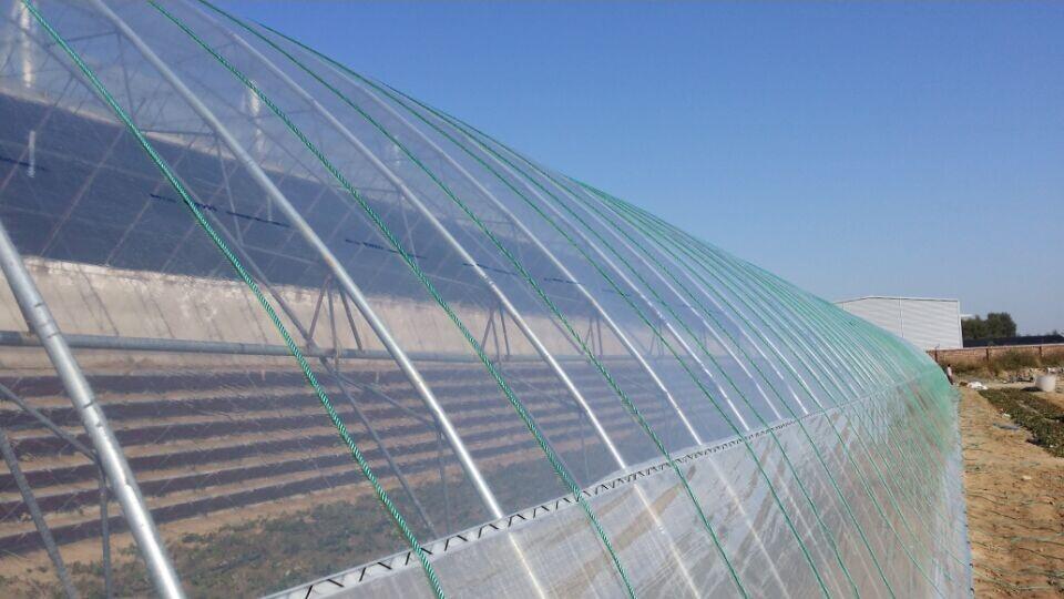 湖南消雾流滴灌浆力量膜-潍坊方圆百里专业的灌浆膜提供商