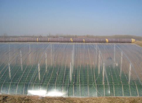 福建双色大棚膜|想买品质好的大棚膜,就到迅达农业