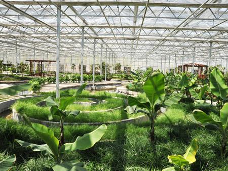 北方温室大棚建设-华美温室供应放心的连栋智能温室建造
