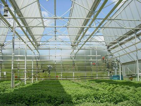 阳光板大棚价格,想要有保障的阳光板温室大棚建设就找华美温室