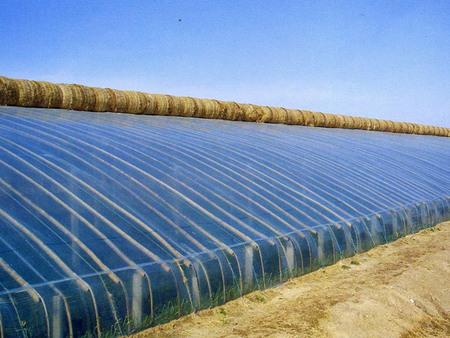 提供高质量的日光温室大棚建造_日光温室大棚造价