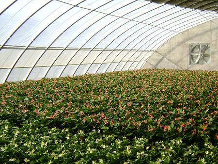 山东哪家日光温室大棚建造公司好 智能花卉温室大棚