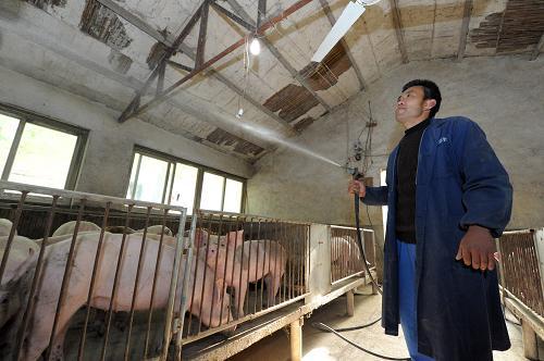 南宁哪里有卖划算的广西生猪屠宰场_广西哪里有定点屠宰