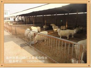 承山绒山羊繁育专业合作社有品质的绒山羊出售|山东绒山羊