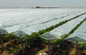 广西哪里有农业专用膜-知名厂家为您推荐高质量广东葡萄种植专用膜