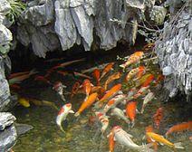 戶外魚池水渾濁處理專業提供|江蘇別墅魚池凈化
