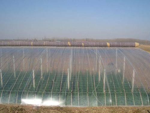 潍坊哪里有专业的农用大棚膜供应商|加工农用大棚膜