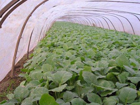 EVA農膜——多功能EVA農膜生產