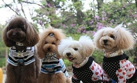 【艾娃尚宠】烟台宠物美容 烟台宠物美容培训 烟台宠物店