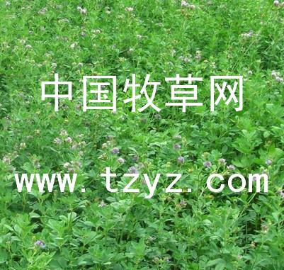 哪里能买到有口碑的苜蓿除草剂|裕华苜蓿除草剂