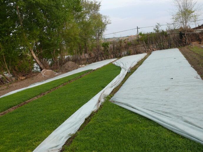 除草无纺布-高质量的无纺布直销供应