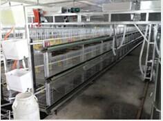 【伟杰】笼养鸭交钥匙工程;标准化笼养肉食鸭全套设备