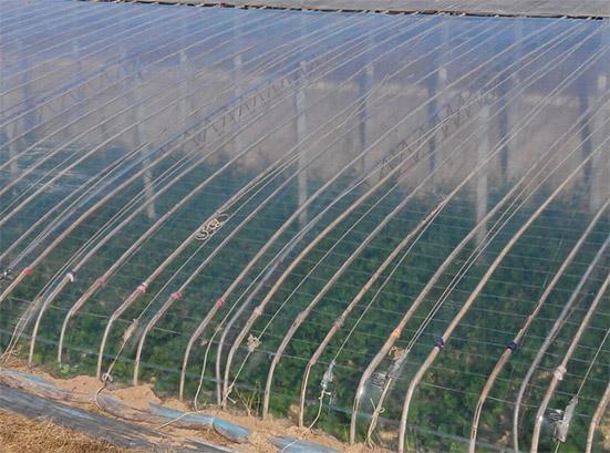 宁夏EVA大棚膜_买EVA大棚膜当然是到一品元农业技术