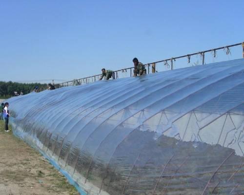 陕西西瓜大棚膜|想买品质好的西瓜大棚膜,就到一品元农业技术