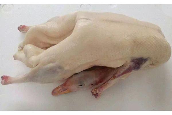 临朐朗德鹅鹅体|采购品质好的鹅体就找鸿兴鹅业