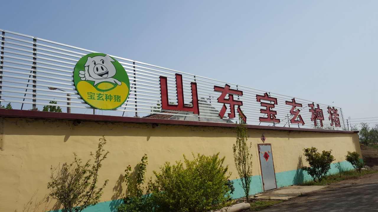 信誉好的新美系新美系长白种猪养殖厂商|长白种猪