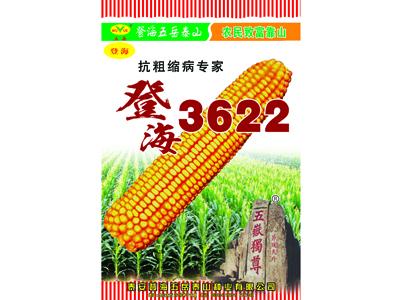 高品质玉米种子推荐-山东玉米种子