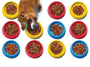 优良的宠物食品辐照上哪找|辐照价格