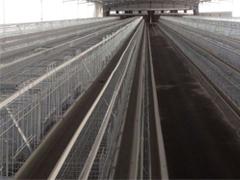 河源自动清粪机-可信赖的养殖设备厂在广东