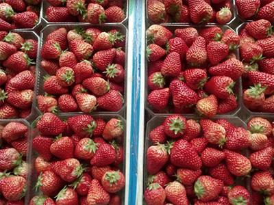大连有机水果厂 大连口碑好的有机水果经销商