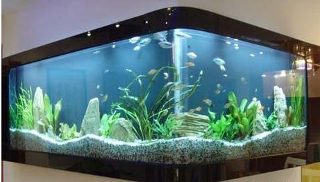 烤漆玻璃鱼缸