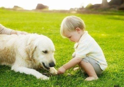 【信诺宠物】烟台宠物美容 烟台宠物美容哪家好 烟台宠物医院