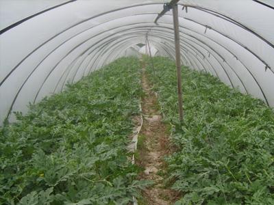 花卉大棚膜厂家-高质量的温室大棚市场价格
