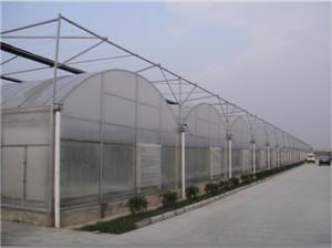 连栋温室大棚建造-口碑好的连栋温室大棚推荐