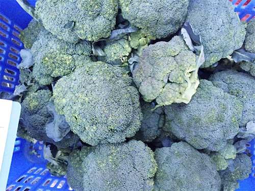 东莞知名的东莞蔬菜供应商|新鲜蔬菜配送