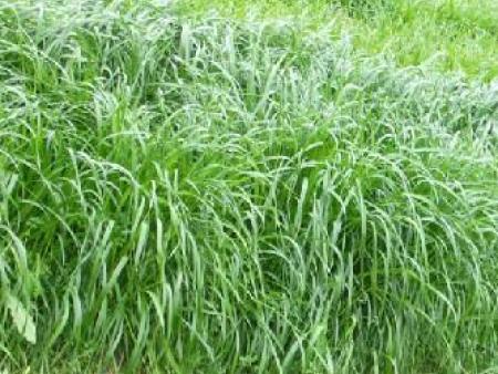 建设牧草种子储藏库的注意事项