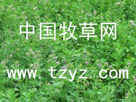 植物成长调节剂用在牧草种子中会有什么效果?
